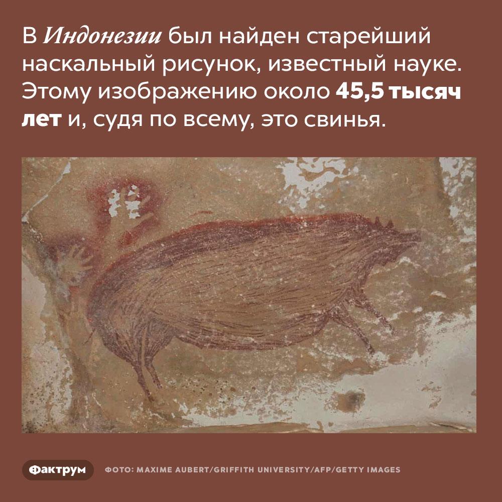 Самому старому наскальному рисунку, сделанному человеком, почти 50000лет. В Индонезии был найден старейший наскальный рисунок, известный науке. Этому изображению около 45,5 тысяч лет и, судя по всему, это свинья.