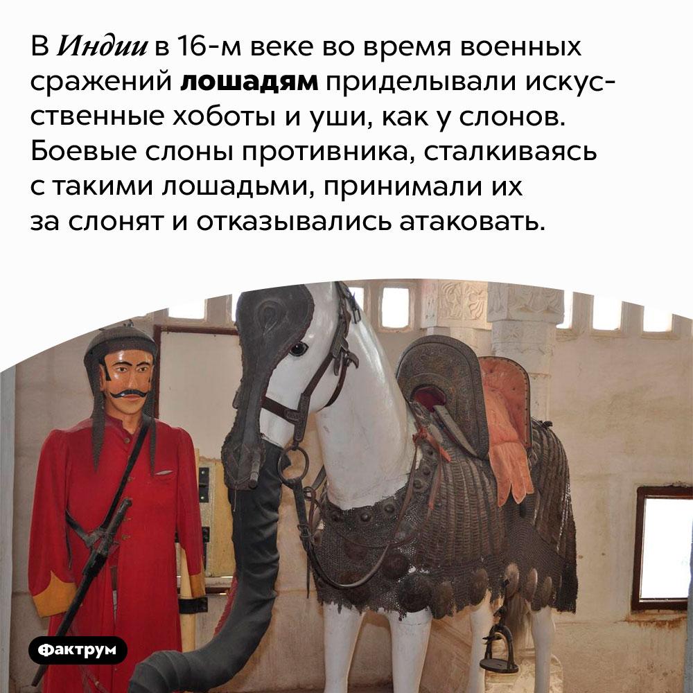 ВИндии 16-говека лошадей вовремя сражений маскировали под слонят. В Индии в 16-м веке во время военных сражений лошадям приделывали искусственные хоботы и уши, как у слонов. Боевые слоны противника, сталкиваясь с такими лошадьми, принимали их за слонят и отказывались атаковать.