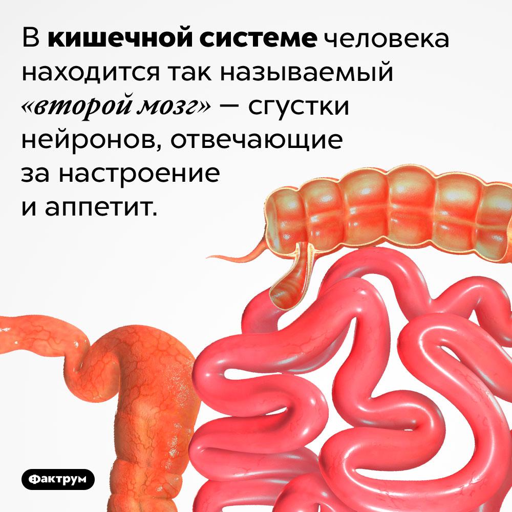Где находится «второй мозг». Вкишечной системе человека находится так называемый «второй мозг»— сгустки нейронов, отвечающие занастроение иаппетит.