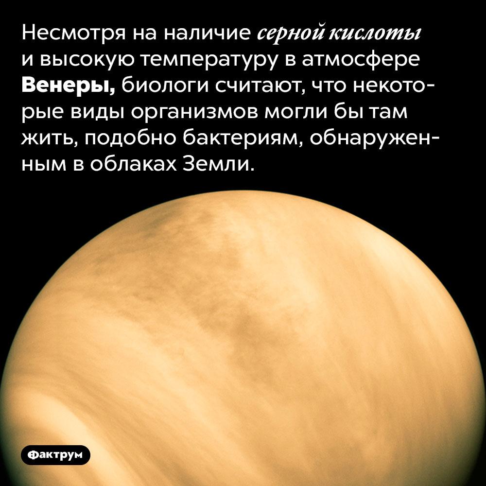 Возможно, наВенере есть бактерии. Несмотря на наличие серной кислоты и высокую температуру в атмосфере Венеры, биологи считают, что некоторые виды организмов могли бы там жить, подобно бактериям, обнаруженным в облаках Земли.