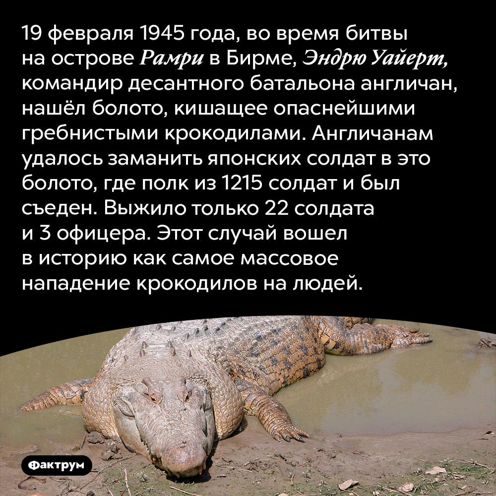 Самое массовое нападение крокодилов налюдей. 19 февраля 1945 года, во время битвы на острове Рамри в Бирме, Эндрю Уайерт, командир десантного батальона англичан, нашёл болото, кишащее опаснейшими гребнистыми крокодилами. Англичанам удалось заманить японских солдат в это болото, где полк из 1215 солдат и был съеден. Выжило только 22 солдата и 3 офицера. Этот случай вошел в историю как самое массовое нападение крокодилов на людей.
