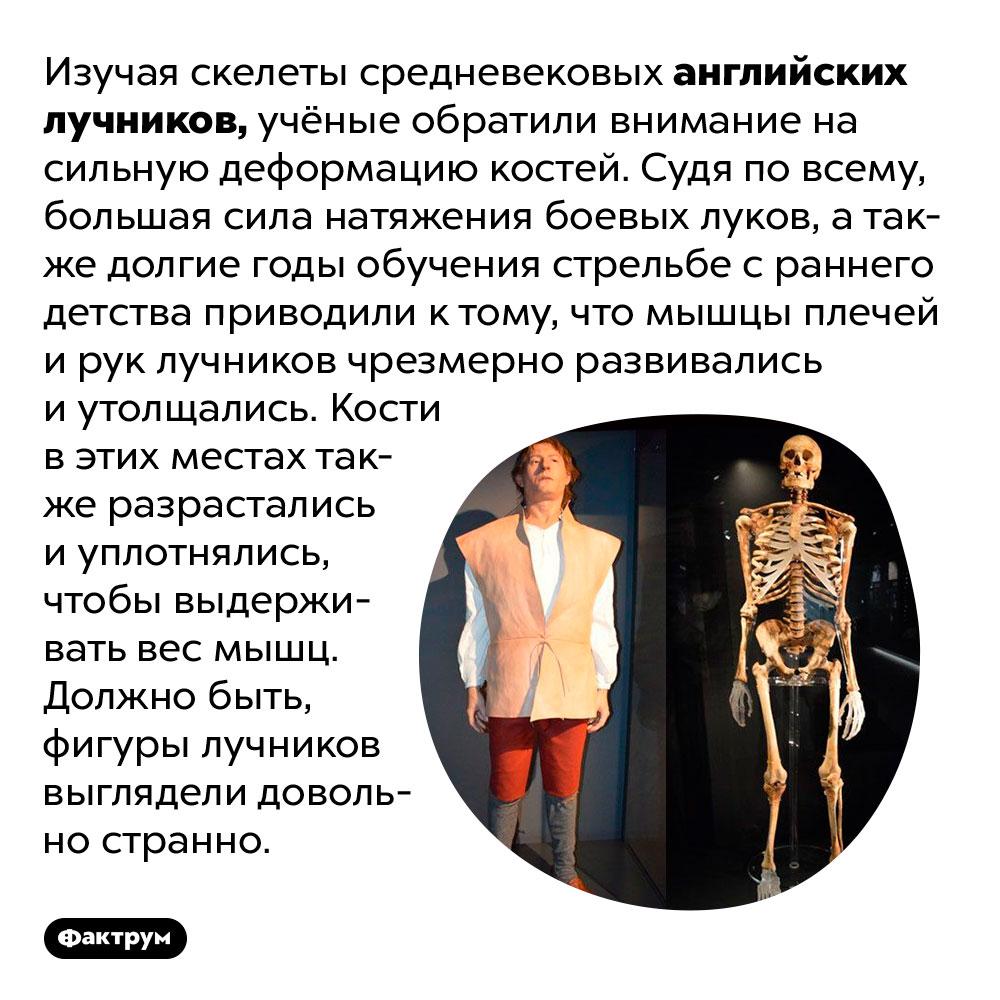 У средневековых лучников были огромные плечи имощные руки. Изучая скелеты средневековых английских лучников, учёные обратили внимание на сильную деформацию костей. Судя по всему, большой вес боевых луков, а также долгие годы обучения стрельбе с раннего детства приводили к тому, что мышцы плечей и рук лучников чрезмерно развивались и утолщались. Кости в этих местах также разрастались и уплотнялись, чтобы выдерживать вес мышц. Должно быть, фигуры лучников выглядели довольно странно.