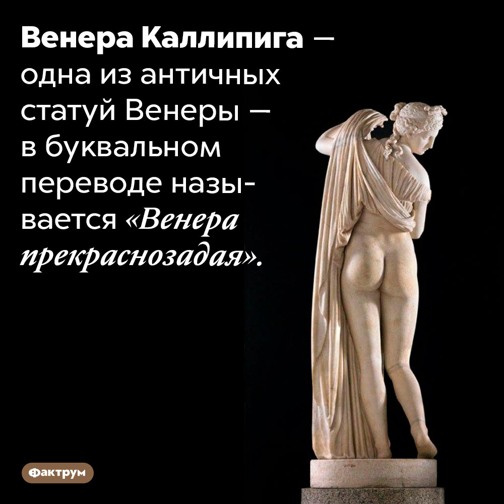 Одна изантичных статуй Венеры прекраснозада. Венера Каллипига — одна из античных статуй Венеры — в буквальном переводе называется «Венера прекраснозадая».