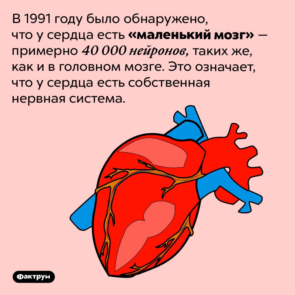 У сердца есть собственный «мозг». В 1991 году было обнаружено, что у сердца есть «маленький мозг» — примерно 40 000 нейронов, таких же, как и в головном мозге. Это означает, что у сердца есть собственная нервная система.
