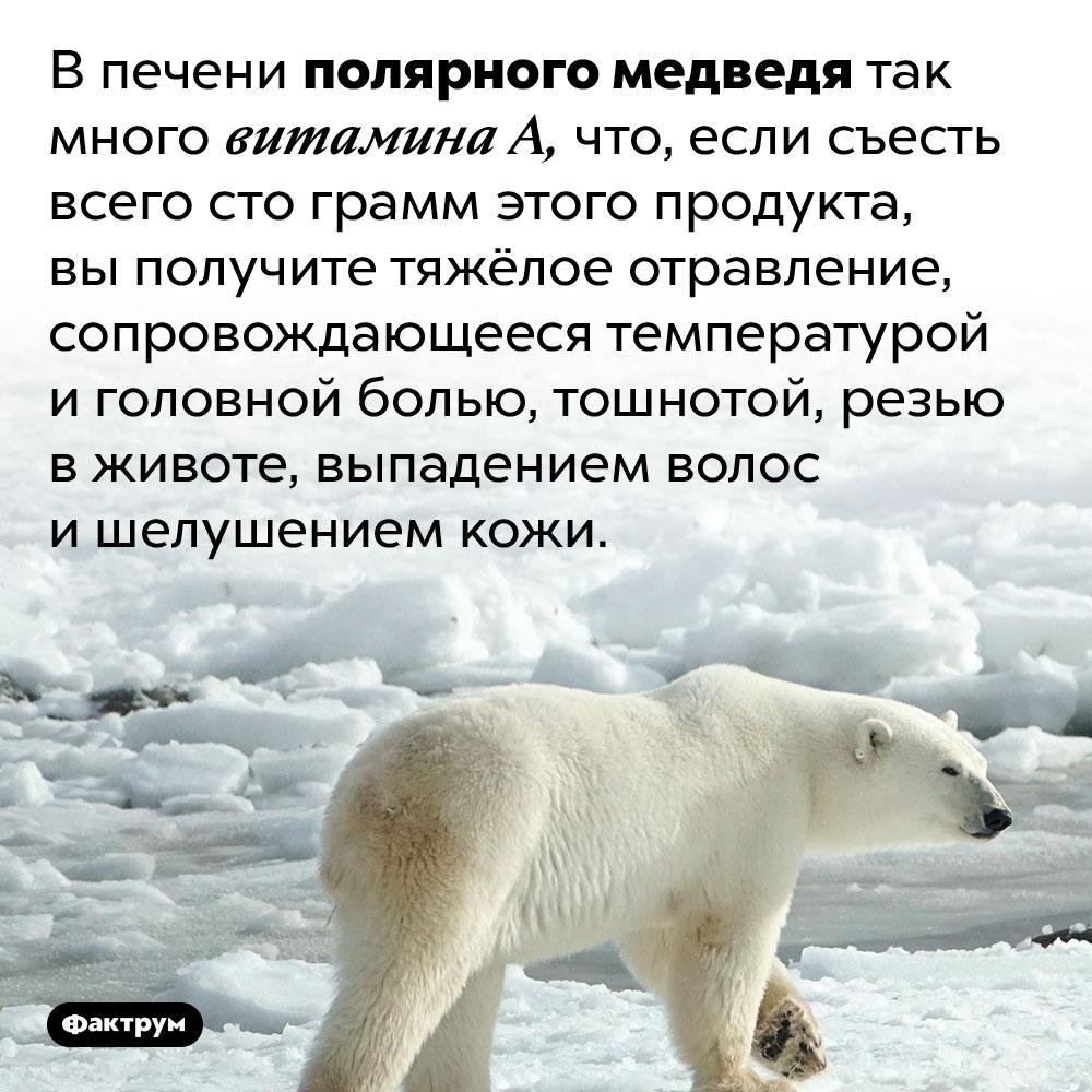 Печень белого медведя очень ядовита. В печени полярного медведя так много витамина А, что, если съесть всего сто грамм этого продукта, вы получите тяжёлое отравление, сопровождающееся температурой и головной болью, тошнотой, резью в животе, выпадением волос и шелушением кожи.