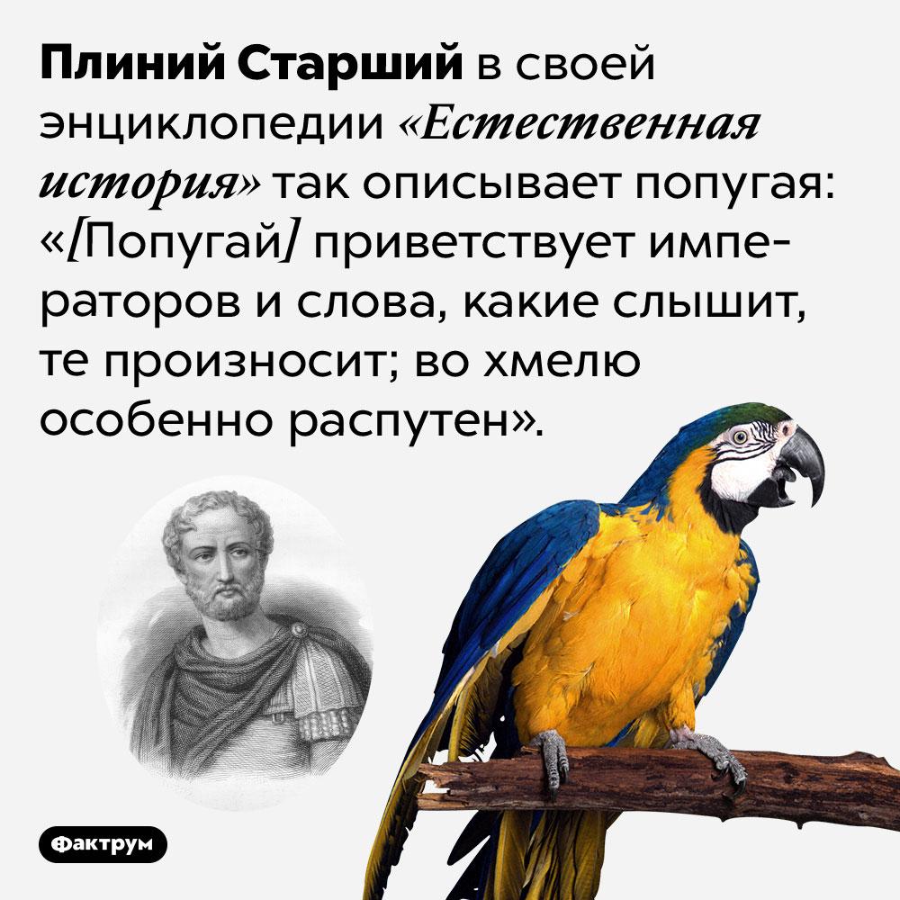 Попугаи вохмелю особенно распутны, считал Плиний Старший. Плиний Старший в своей энциклопедии «Естественная история» так описывает попугая: «[Попугай] приветствует императоров и слова, какие слышит, те произносит; во хмелю особенно распутен».