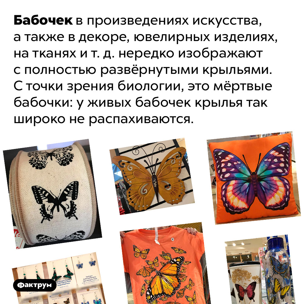 Бабочки сполностью развёрнутыми крыльями мертвы. Бабочек в произведениях искусства, а также в декоре, ювелирных изделиях, на тканях и т. д. нередко изображают с полностью развёрнутыми крыльями. С точки зрения биологии, это мёртвые бабочки: у живых бабочек крылья так широко не распахиваются.