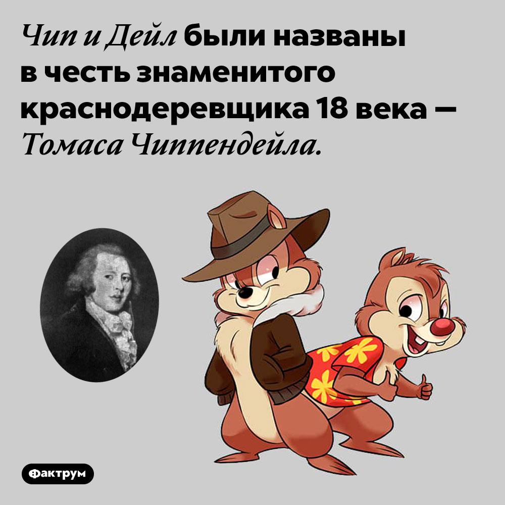 Чип иДейл — это игра слов отфамилии Чиппендейл. Чип и Дейл были названы в честь знаменитого краснодеревщика 18 века — Томаса Чиппендейла.