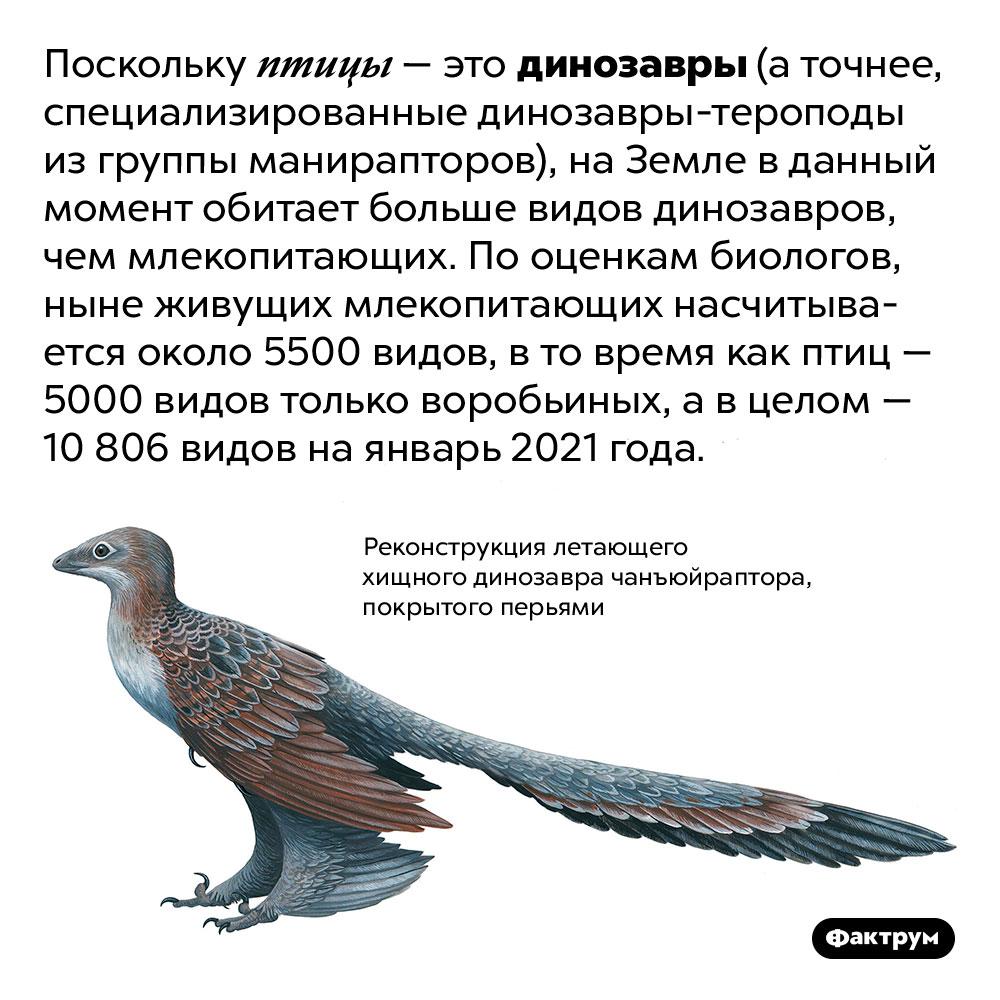 НаЗемле живёт вдвое больше видов динозавров, чем млекопитающих. Поскольку птицы — это динозавры (а точнее, специализированные динозавры-тероподы из группы манирапторов), на Земле в данный момент обитает больше видов динозавров, чем млекопитающих. По оценкам биологов, ныне живущих млекопитающих насчитывается около 5500 видов, в то время как птиц — 5000 видов только воробьиных, а в целом — 10 806 видов на январь 2021 года.