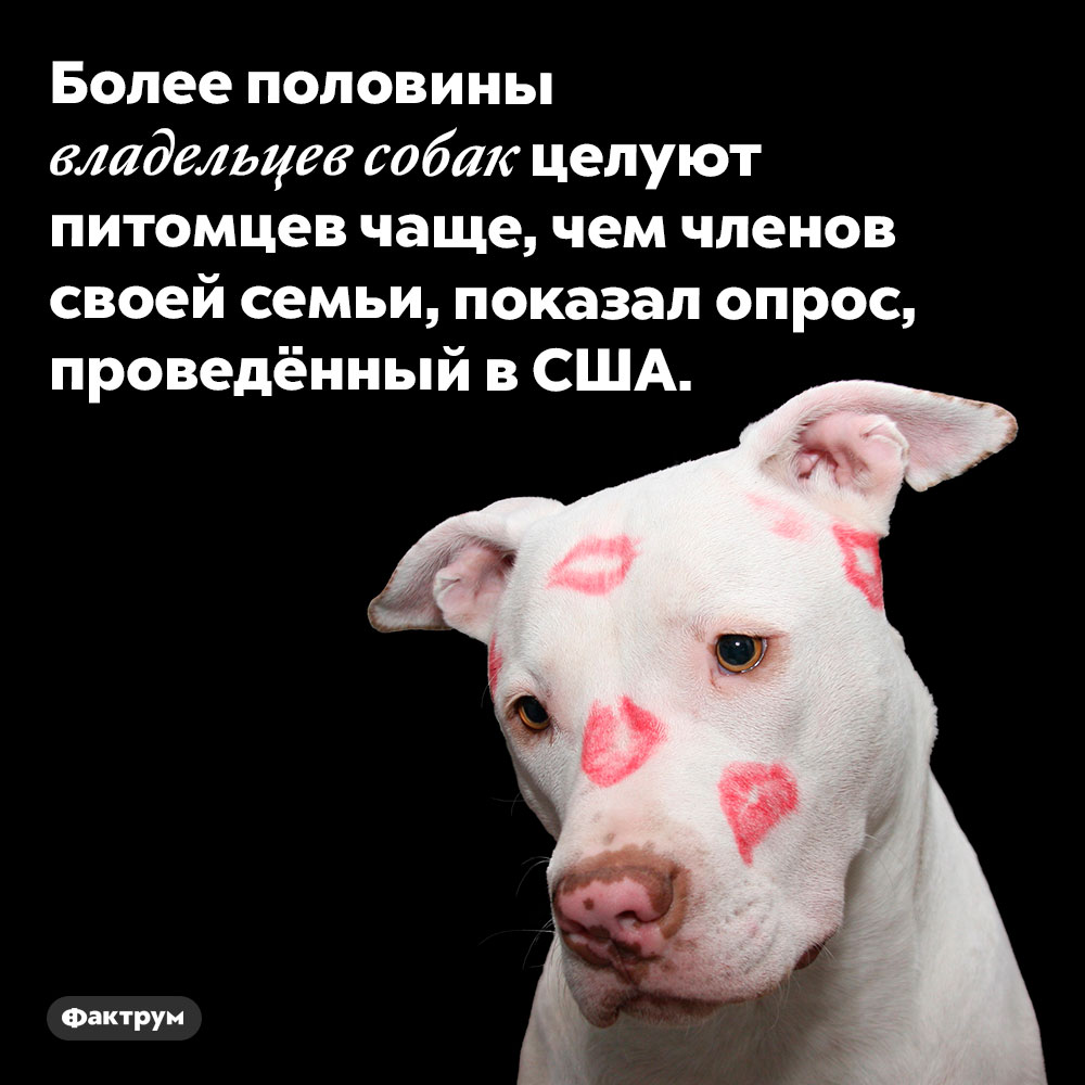 Собачники целуют собак чаще, чем своих любимых. Более половины владельцев собак целуют питомцев чаще, чем членов своей семьи, показал опрос, проведённый в США.