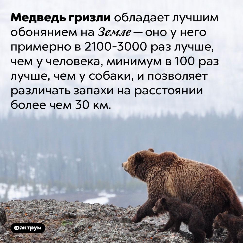 Лучшее обоняние вмире — умедведей гризли. Медведь гризли обладает лучшим обонянием на Земле — оно у него примерно в 2100-3000 раз лучше, чем у человека, минимум в 100 раз лучше, чем у собаки, и позволяет различать запахи на расстоянии более чем 30 км.
