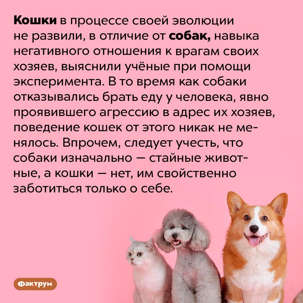 Кошки нереагируют наврагов своих хозяев. Кошки в процессе своей эволюции не развили, в отличие от собак, навыка негативного отношения к врагам своих хозяев, выяснили учёные при помощи эксперимента. В то время как собаки отказывались брать еду у человека, явно проявившего агрессию в адрес их хозяев, поведение кошек от этого никак не менялось. Впрочем, следует учесть, что собаки изначально — стайные животные, а кошки — нет, им свойственно заботиться только о себе.