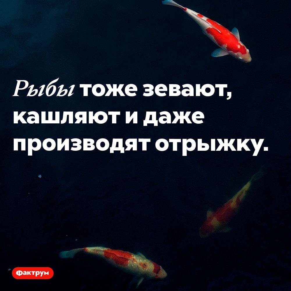 Рыбы тоже делают это. Рыбы тоже зевают, кашляют и даже производят отрыжку.