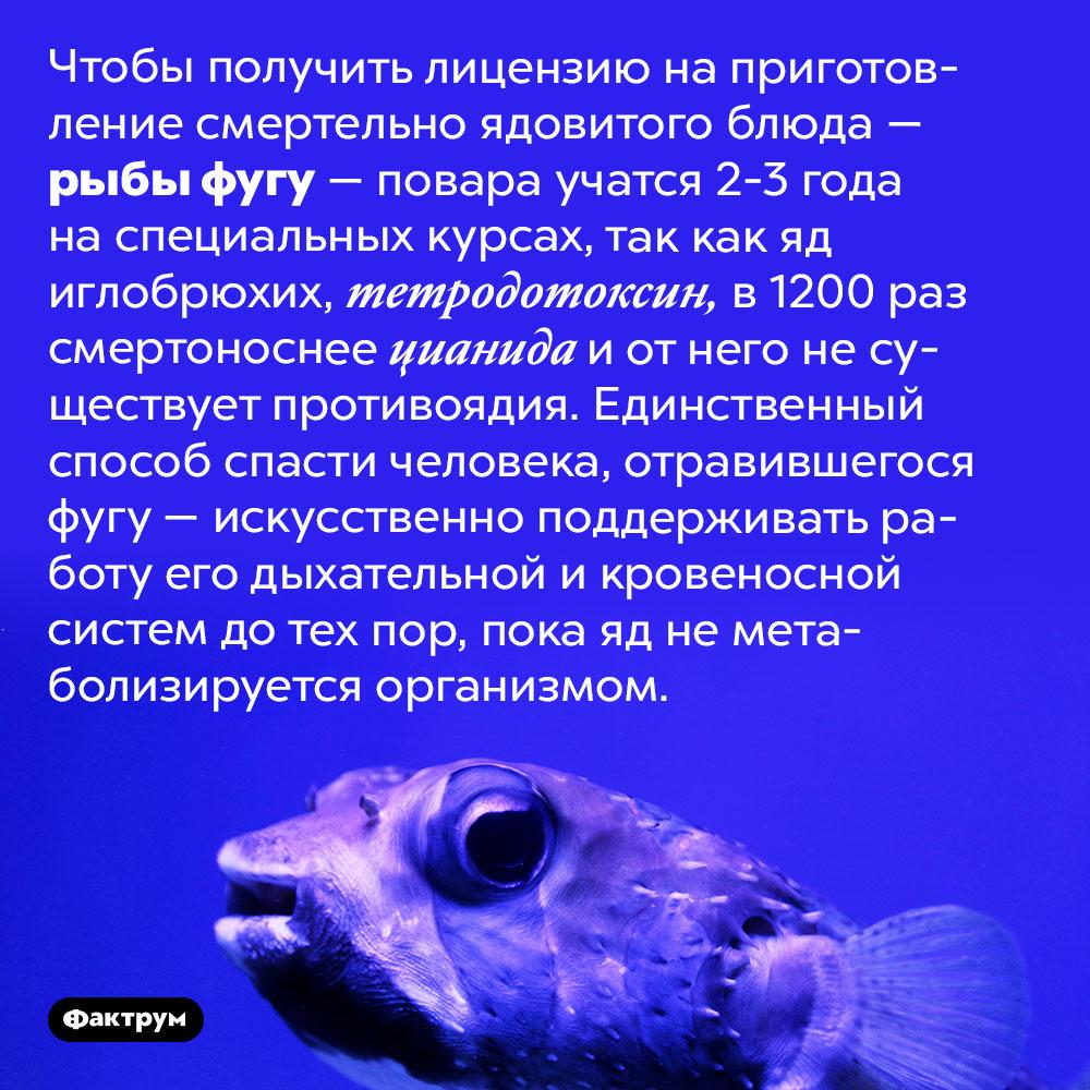 Тетродотоксин, содержащийся в рыбах, изкоторых готовят фугу, в1200раз опаснее цианида. Чтобы получить лицензию на приготовление смертельно ядовитого блюда — рыбы фугу — повара учатся 2-3 года на специальных курсах, так как яд иглобрюхих, тетродотоксин, в 1200 раз смертоноснее цианида и от него не существует противоядия. Единственный способ спасти человека, отравившегося фугу — искусственно поддерживать работу его дыхательной и кровеносной систем до тех пор, пока яд не метаболизируется организмом.