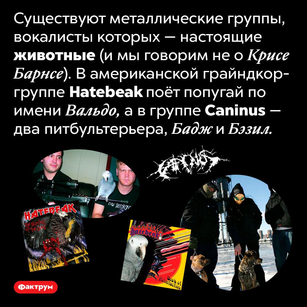 Животные-металлисты. Существуют металлические группы, вокалисты которых — настоящие животные (и мы говорим не о Крисе Барнсе). В американской грайндкор-группе <em>Hatebeak</em> поёт попугай по имени Вальдо, а в группе <em>Caninus</em> — два питбультерьера, Бадж и Бэзил.