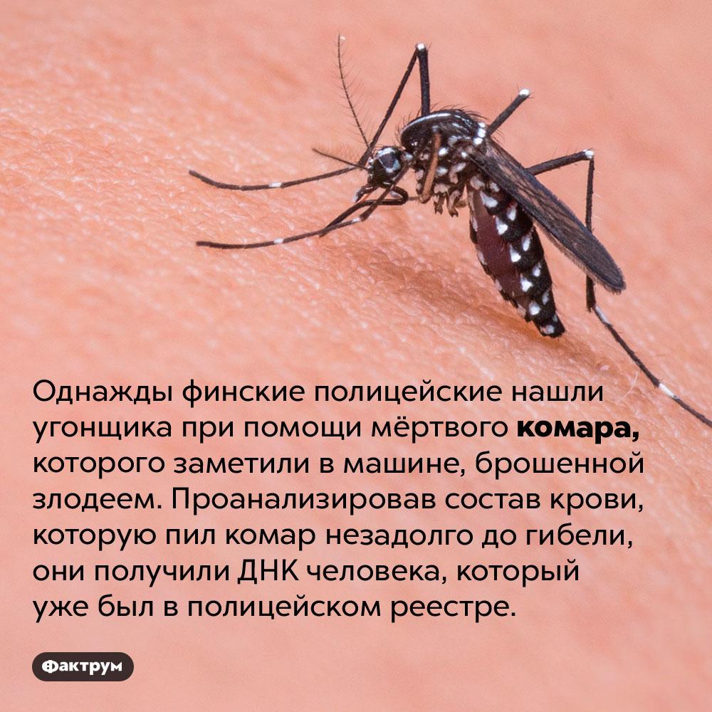 Как поймать преступника при помощи комара. Однажды финские полицейские нашли угонщика при помощи мёртвого комара, которого заметили в машине, брошенной злодеем. Проанализировав состав крови, которую пил комар незадолго до гибели, они получили ДНК человека, который уже был в полицейском реестре.