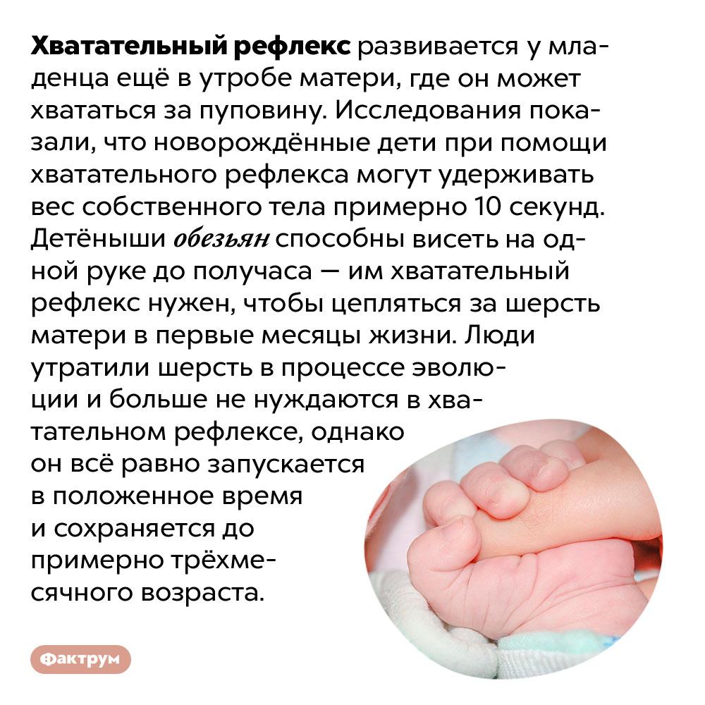 Зачем нужен хватательный рефлекс умладенцев?. Хватательный рефлекс развивается у младенца ещё в утробе матери, где он может хвататься за пуповину. Исследования показали, что новорождённые дети при помощи хватательного рефлекса могут удерживать вес собственного тела примерно 10 секунд. Детёныши обезьян способны висеть на одной руке до получаса — им хватательный рефлекс нужен, чтобы цепляться за шерсть матери в первые месяцы жизни. Люди утратили шерсть в процессе эволюции и больше не нуждаются в хватательном рефлексе, однако он всё равно запускается в положенное время и сохраняется до примерно трёхмесячного возраста.