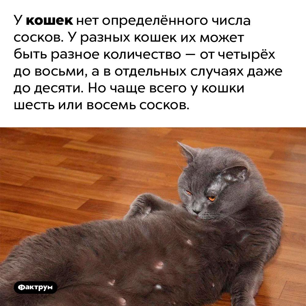 У кошек может быть разное количество сосков. У кошек нет определённого числа сосков. У разных кошек их может быть разное количество — от четырёх до восьми, а в отдельных случаях даже до десяти. Но чаще всего у кошки шесть или восемь сосков.