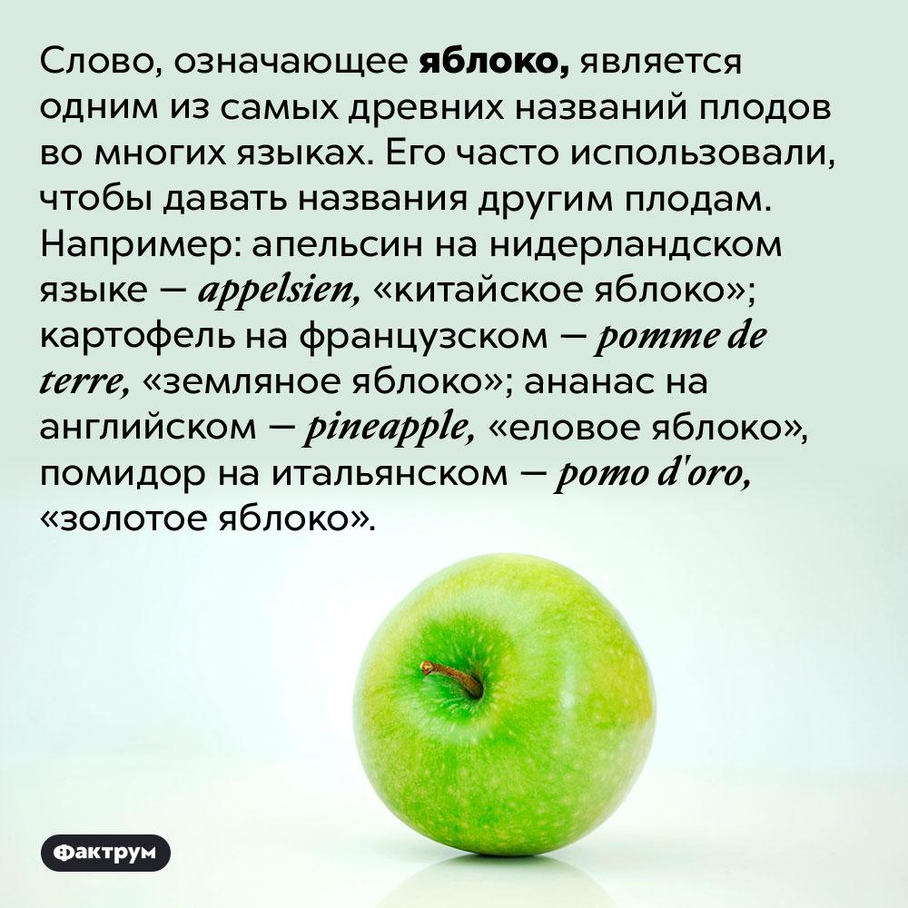 Слово, означающее яблоко, встречается вназваниях многих других плодов. Слово, означающее яблоко, является одним из самых древних названий плодов во многих языках. Его часто использовали, чтобы давать названия другим плодам. Например: апельсин на нидерландском языке — <em>appelsien,</em> «китайское яблоко»; картофель на французском — <em>pomme de terre,</em> «земляное яблоко»; ананас на английском — <em>pineapple,</em> «еловое яблоко», помидор на итальянском — <em>pomo d'oro,</em> «золотое яблоко».