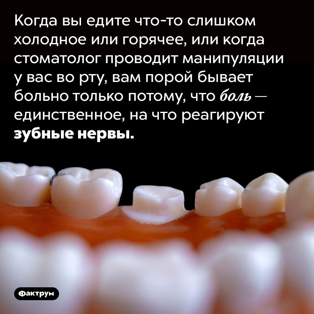 Зубы могут чувствовать только боль. Когда вы едите что-то слишком холодное или горячее, или когда стоматолог проводит манипуляции у вас во рту, вам порой бывает больно только потому, что боль — единственное, на что реагируют зубные нервы.