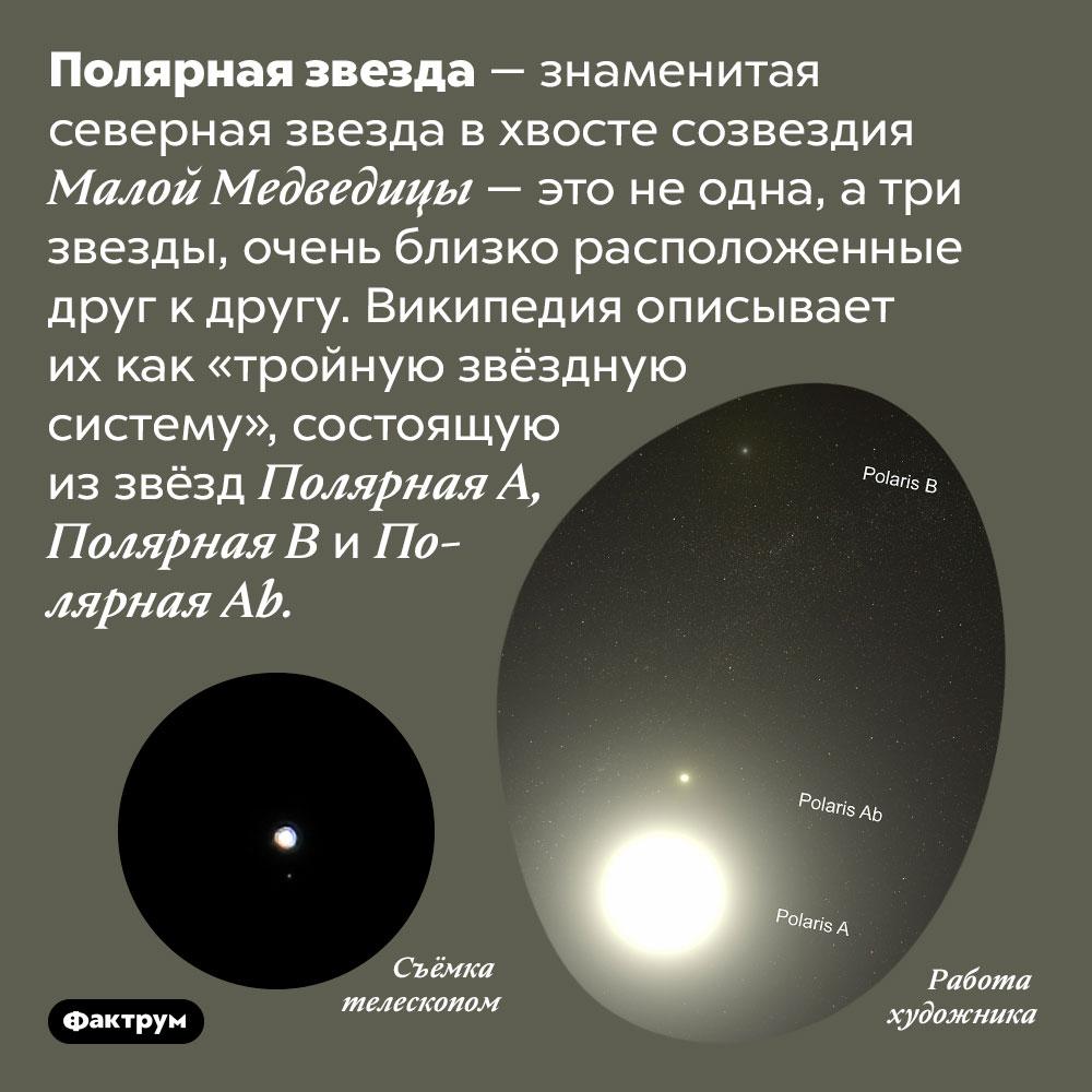 Полярная звезда — это три звезды. Полярная звезда — знаменитая северная звезда в хвосте созвездия Малой Медведицы — это не одна, а три звезды, очень близко расположенные друг к другу. Википедия описывает их как «тройную звёздную систему», состоящую из звёзд Полярная A, Полярная B и Полярная P.