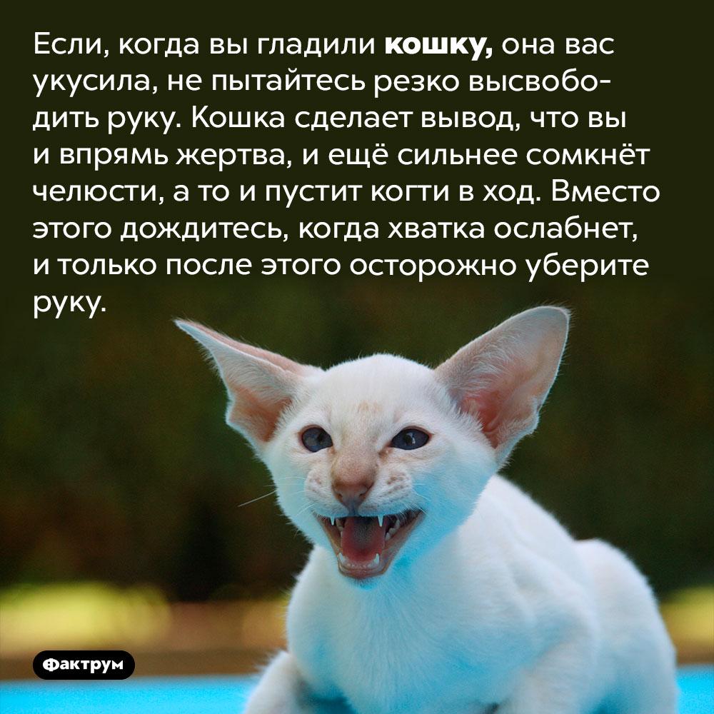 Непытайтесь выдернуть руку укошки изо рта. Если, когда вы гладили кошку, она вас укусила, не пытайтесь резко высвободить руку. Кошка сделает вывод, что вы и впрямь жертва, и ещё сильнее сомкнёт челюсти, а то и пустит когти в ход. Вместо этого дождитесь, когда хватка ослабнет, и только после этого осторожно уберите руку.