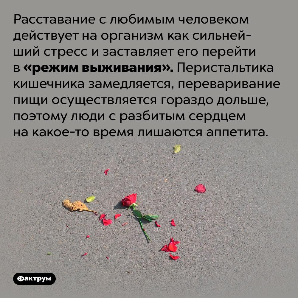 Почему после расставания слюбимым человеком пропадает аппетит. Расставание с любимым человеком действует на организм как сильнейший стресс и заставляет его перейти в «режим выживания». Перистальтика кишечника замедляется, переваривание пищи осуществляется гораздо дольше, поэтому люди с разбитым сердцем на какое-то время лишаются аппетита.