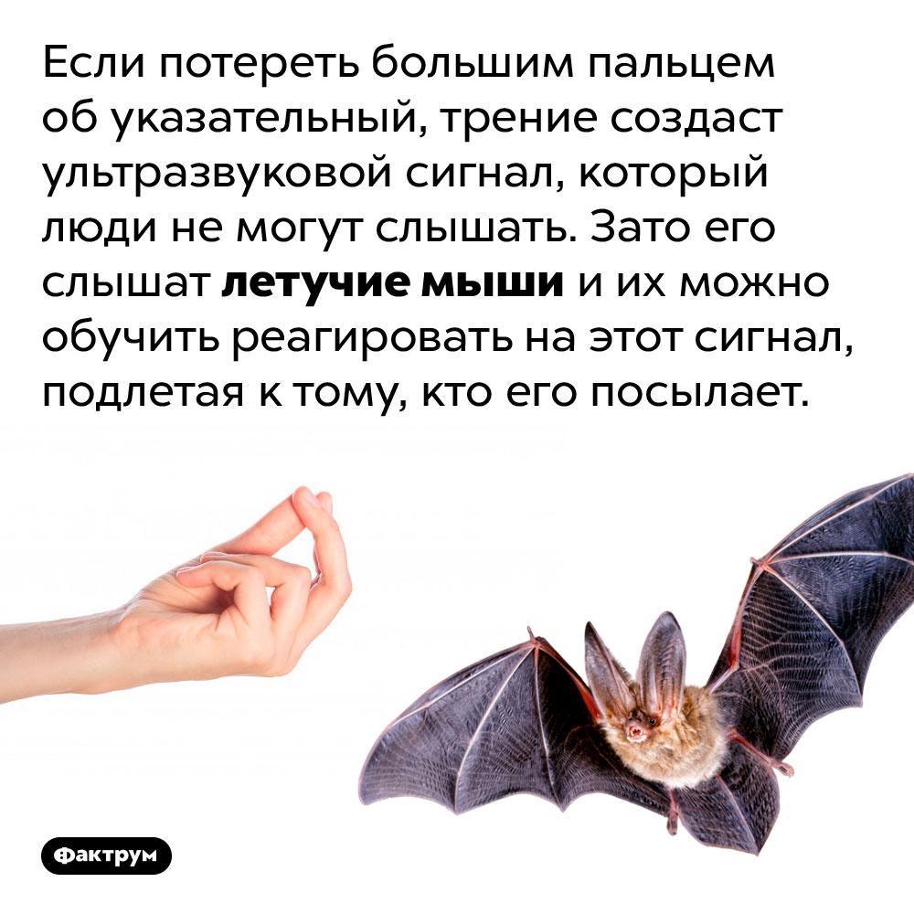 Как создать ультразвук при помощи двух пальцев. Если потереть большим пальцем об указательный, трение создаст ультразвуковой сигнал, который люди не могут слышать. Зато его слышат летучие мыши и их можно обучить реагировать на этот сигнал, подлетая к тому, кто его посылает.