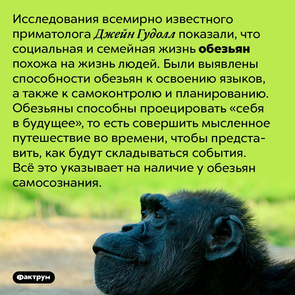 Исследования показывают, что обезьяны обладают самосознанием. Исследования всемирно известного приматолога Джейн Гудолл показали, что социальная и семейная жизнь обезьян похожа на жизнь людей. Были выявлены способности обезьян к освоению языков, а также к самоконтролю и планированию. Обезьяны способны проецировать «себя в будущее», то есть совершить мысленное путешествие во времени, чтобы представить, как будут складываться события. Всё это указывает на наличие у обезьян самосознания.