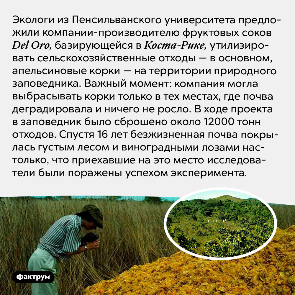 Лес наапельсиновых корках. Экологи из Пенсильванского университета предложили компании-производителю фруктовых соков <em>Del Oro,</em> базирующейся в Коста-Рике, утилизировать сельскохозяйственные отходы — в основном, апельсиновые корки — на территории природного заповедника. Важный момент: компания могла выбрасывать корки только в тех местах, где почва деградировала и ничего не росло. В ходе проекта в заповедник было сброшено около 12000 тонн отходов. Спустя 16 лет безжизненная почва покрылась густым лесом и виноградными лозами настолько, что приехавшие на это место исследователи были поражены успехом эксперимента.