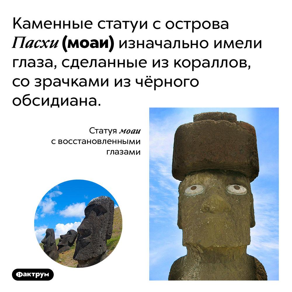 У моаи были глаза изкораллов. Каменные статуи с острова Пасхи (моаи) изначально имели глаза, сделанные из кораллов, со зрачками из чёрного обсидиана.