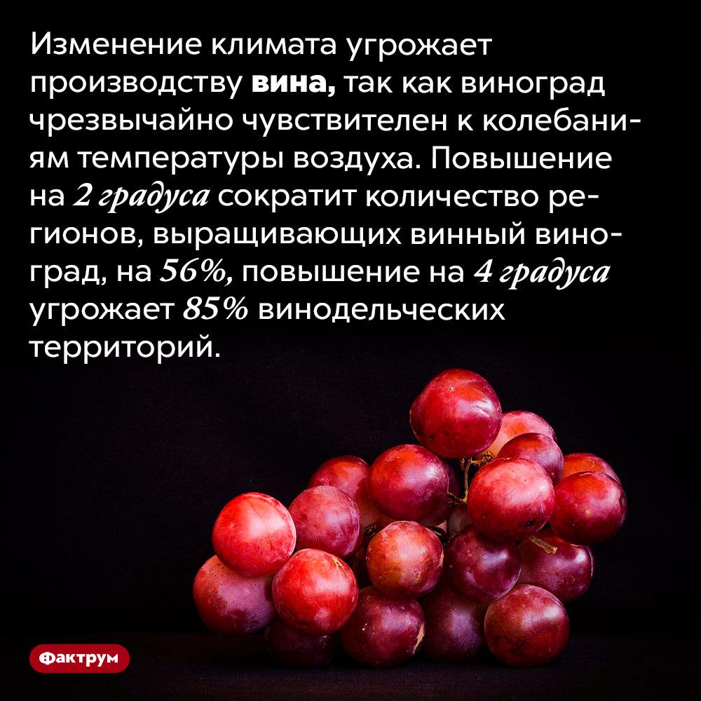 Глобальное потепление угрожает производству вина. Изменение климата угрожает производству вина, так как виноград чрезвычайно чувствителен к колебаниям температуры воздуха. Повышение на 2℃ сократит количество регионов, выращивающих винный виноград, на 56%, повышение на 4℃ угрожает 85% винодельческих территорий.