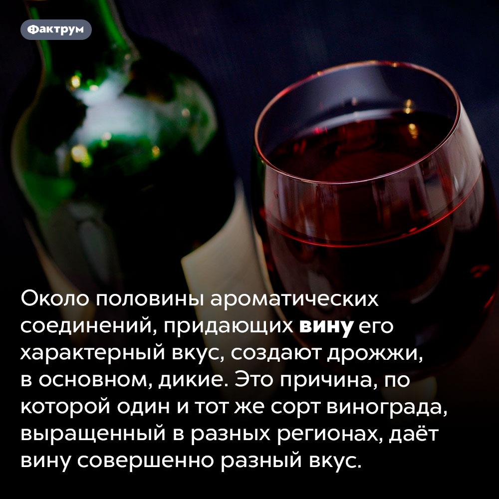 На вкус вина влияют дрожжи. Около половины ароматических соединений, придающих вину его характерный вкус, создают дрожжи, в основном, дикие. Это причина, по которой один и тот же сорт винограда, выращенный в разных регионах, даёт вину совершенно разный вкус.