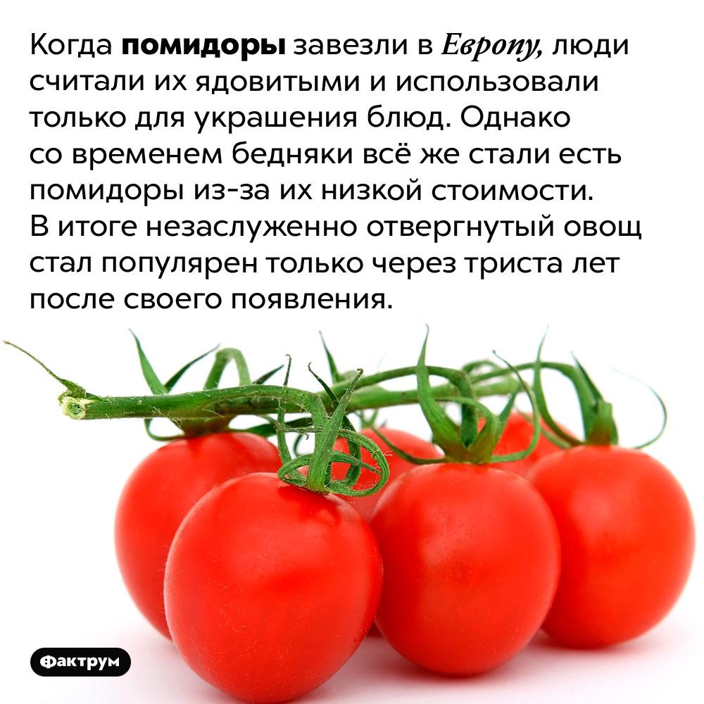 Помидоры стали популярными через триста лет после появления вЕвропе. Когда помидоры завезли в Европу, люди считали их ядовитыми и использовали только для украшения блюд. Однако со временем бедняки всё же стали есть помидоры из-за их низкой стоимости. В итоге незаслуженно отвергнутый овощ стал популярен только через триста лет после своего появления.