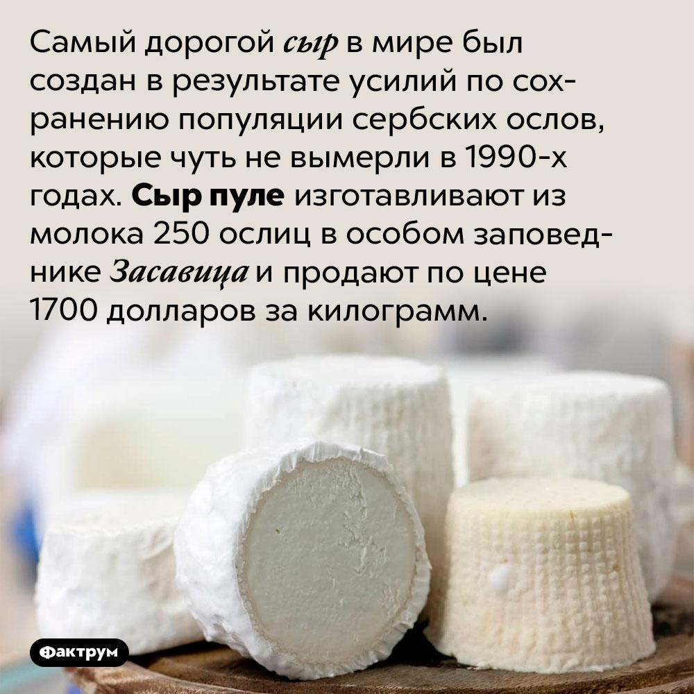 Самый дорогой сыр вмире. Самый дорогой сыр в мире был создан в результате усилий по сохранению популяции сербских ослов, которые чуть не вымерли в 1990-х годах. Сыр пуле изготавливают из молока 250 ослиц в особом заповеднике Засавица и продают по цене 1700 долларов за килограмм.
