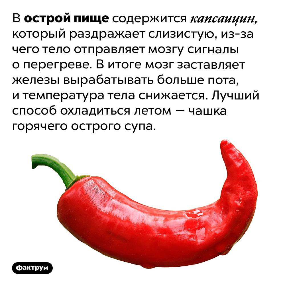 Острая еда охлаждает взнойный день. В острой пище содержится капсаицин, который раздражает слизистую, из-за чего тело отправляет мозгу сигналы о перегреве. В итоге мозг заставляет железы вырабатывать больше пота, и температура тела снижается. Лучший способ охладиться летом — чашка горячего острого супа.