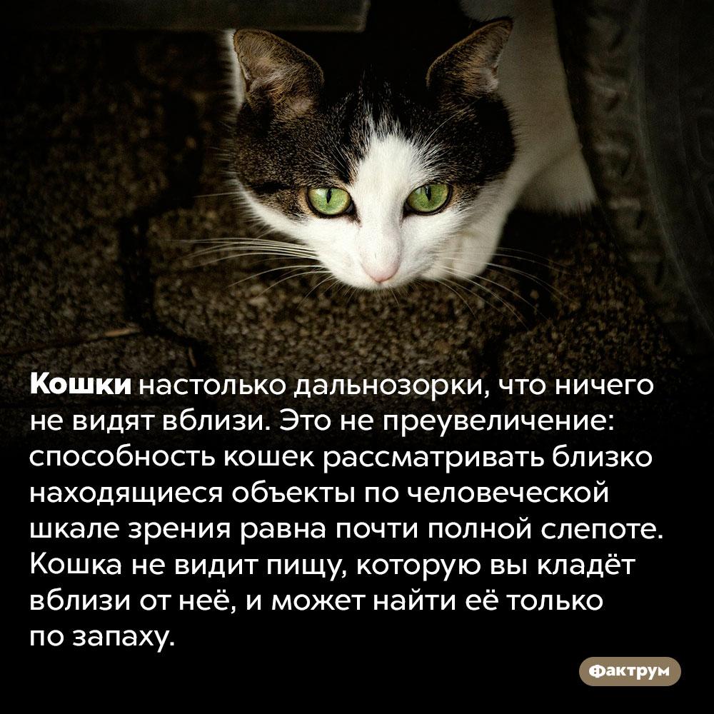 Кошки ничего невидят вблизи. Кошки настолько дальнозорки, что ничего не видят вблизи. Это не преувеличение: способность кошек рассматривать близко находящиеся объекты по человеческой шкале зрения равна почти полной слепоте. Кошка не видит пищу, которую вы кладёт вблизи от неё, и может найти её только по запаху.