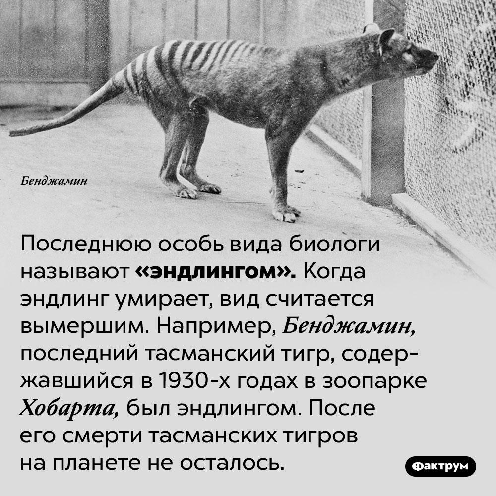 Эндлинг — последний представитель своего вида. Последнюю особь вида биологи называют «эндлингом». Когда эндлинг умирает, вид считается вымершим. Например, Бенджамин, последний тасманский тигр, содержавшийся в 1930-х годах в зоопарке Хобарта, был эндлингом. После его смерти тасманских тигров на планете не осталось.
