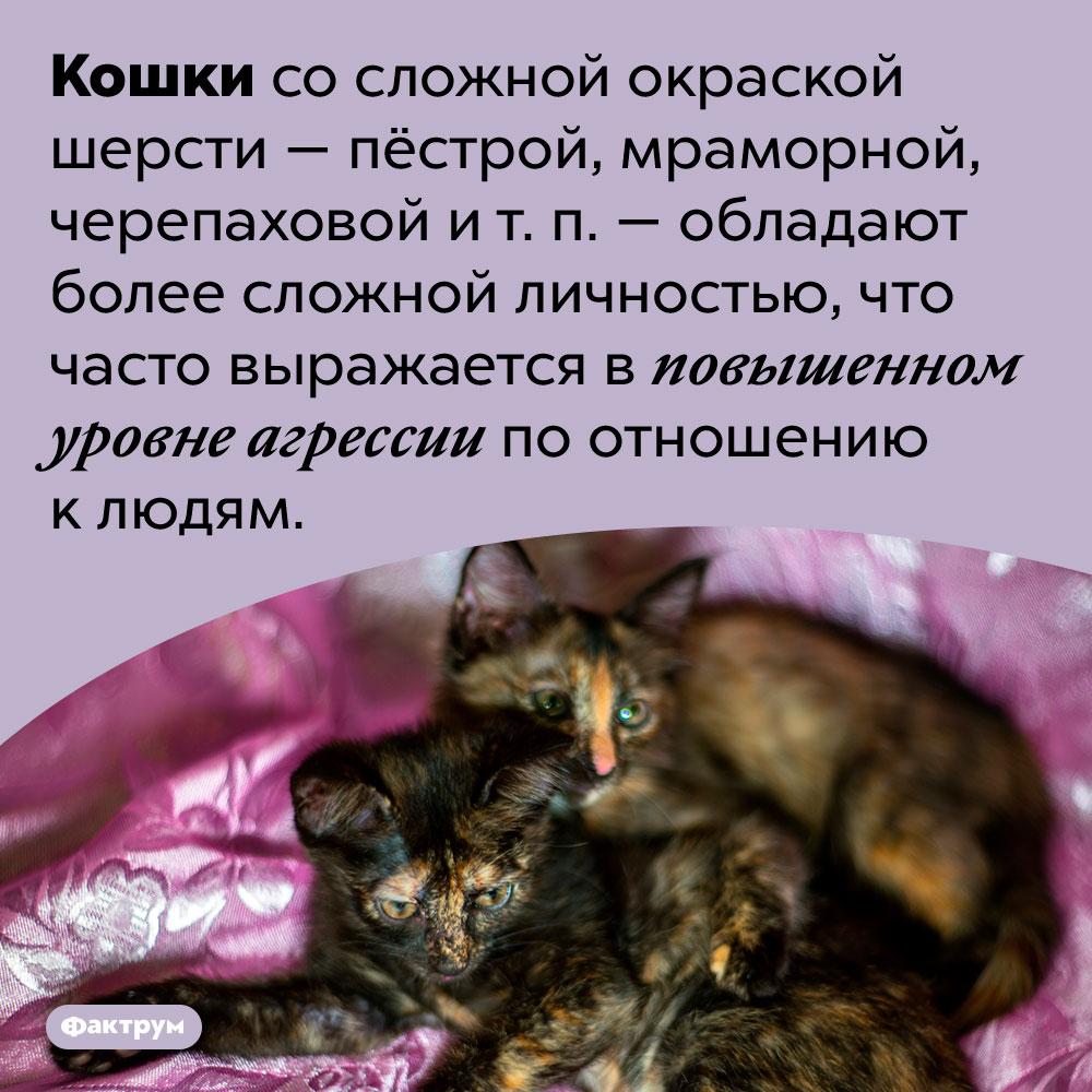 Пёстрые кошки чаще других бывают агрессивными клюдям. Кошки со сложной окраской шерсти — пёстрой, мраморной, черепаховой и т. п. — обладают более сложной личностью, что часто выражается в повышенном уровне агрессии по отношению к людям.