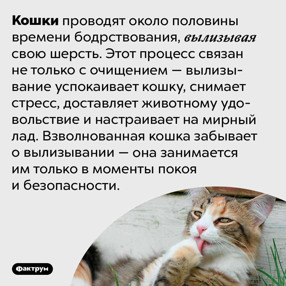 Кошки вылизываются для удовольствия. Кошки проводят около половины времени бодрствования, вылизывая свою шерсть. Этот процесс связан не только с очищением — вылизывание успокаивает кошку, снимает стресс, доставляет животному удовольствие и настраивает на мирный лад. Взволнованная кошка забывает о вылизывании — она занимается им только в моменты покоя и безопасности.