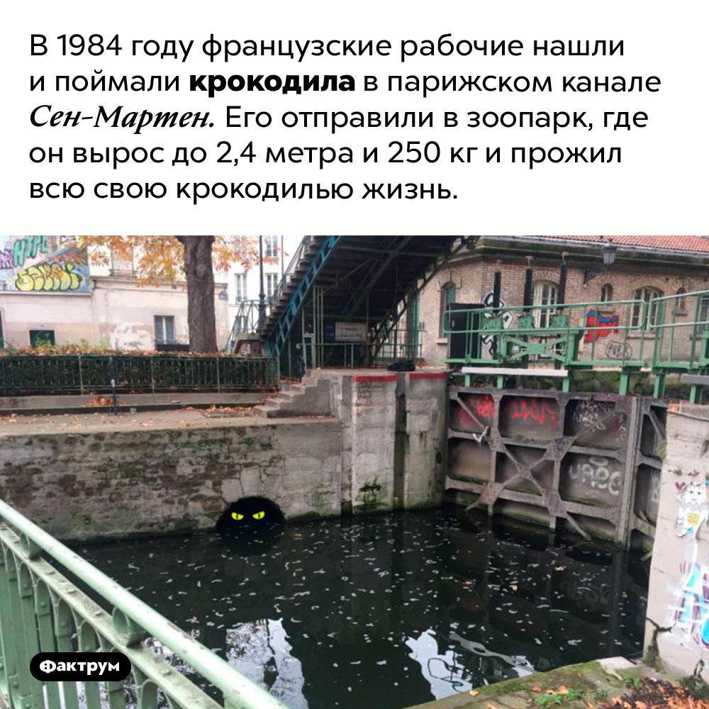 Крокодил впарижском канале. В 1984 году французские рабочие нашли и поймали крокодила в парижском канале  Сен-Мартен. Его отправили в зоопарк, где он вырос до 2,4 метра и 250 кг и прожил всю свою крокодилью жизнь.