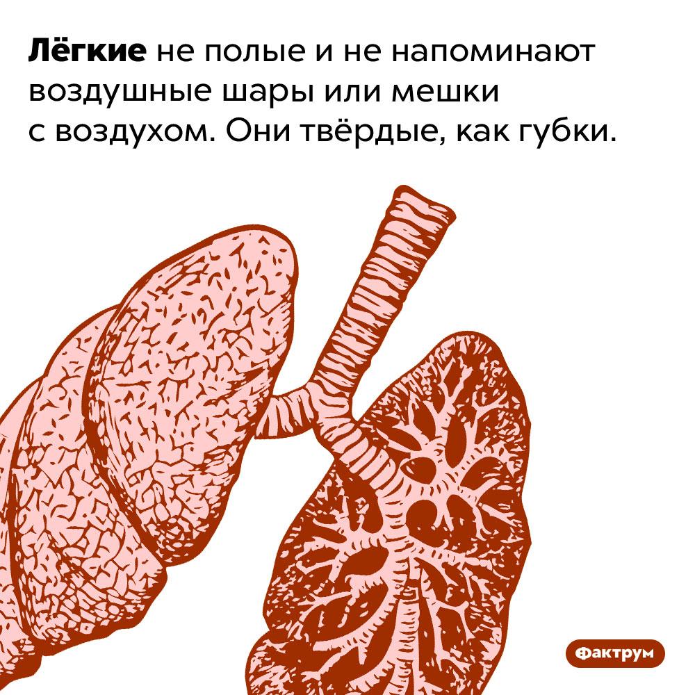 Лёгкие непохожи намешки своздухом. Лёгкие не полые и не напоминают воздушные шары или мешки с воздухом. Они твёрдые, как губки.