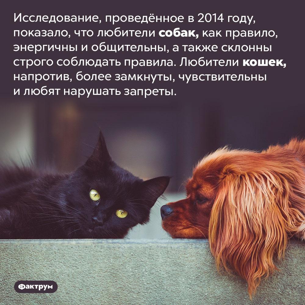 Любители собак следуют правилам, алюбители кошек любят нарушать запреты. Исследование, проведённое в 2014 году, показало, что любители собак, как правило, энергичны и общительны, а также склонны строго соблюдать правила. Любители кошек, напротив, более замкнуты, чувствительны и любят нарушать запреты.