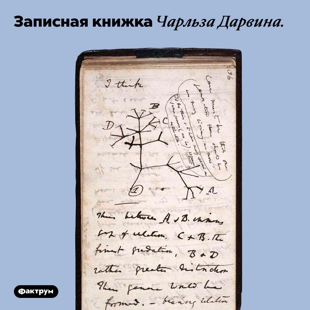 Записная книжка Чарльза Дарвина.