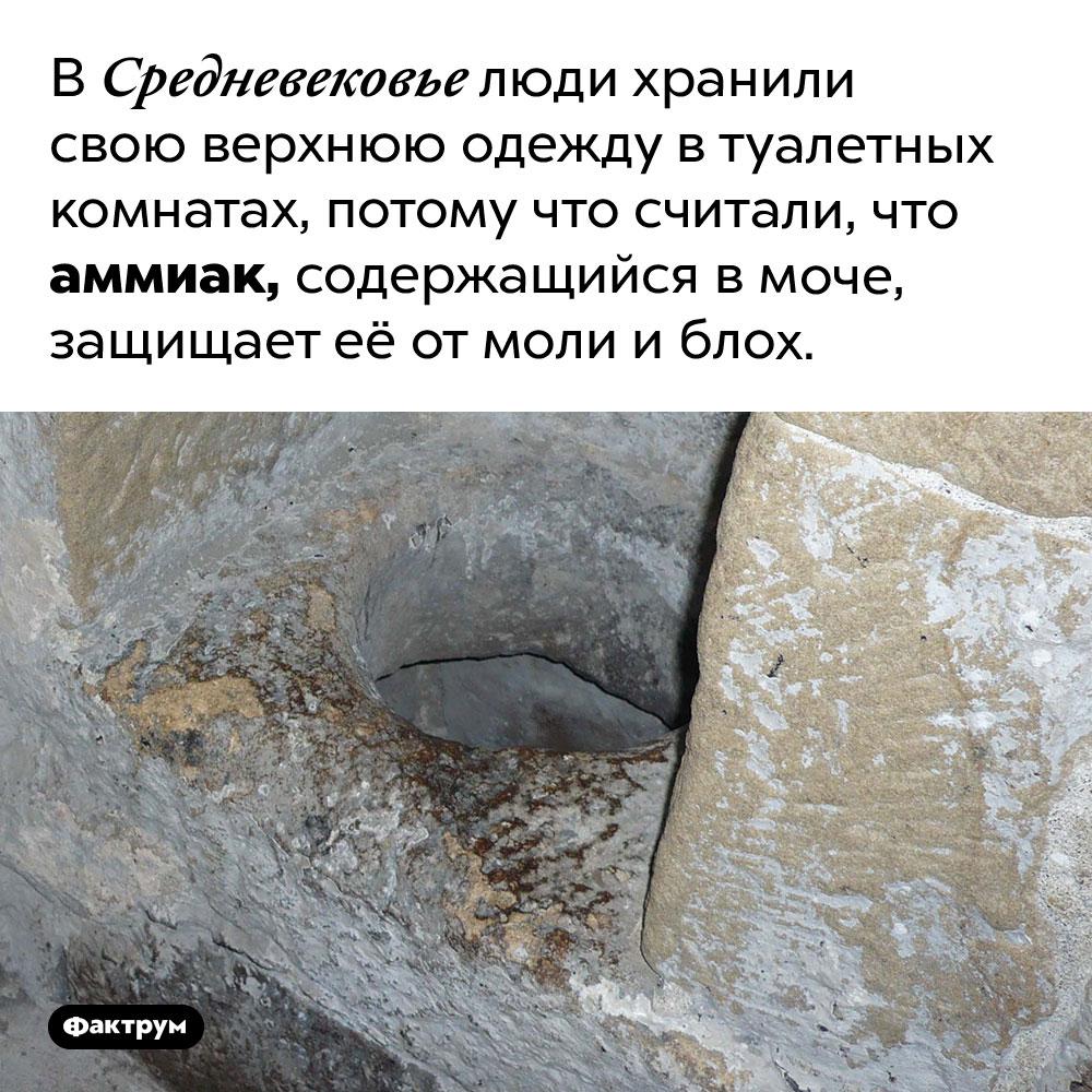 Почему вСредневековье одежду хранили втуалетах?. В Средневековье люди хранили свою верхнюю одежду в туалетных комнатах, потому что считали, что аммиак, содержащийся в моче, защищает её от моли и блох.