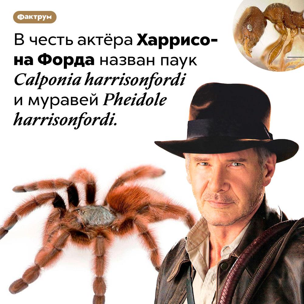 Паук-Харрисон Форд. В честь актёра Харрисона Форда назван паук <em>Calponia harrisonfordi</em> и муравей <em>Pheidole harrisonfordi.</em>