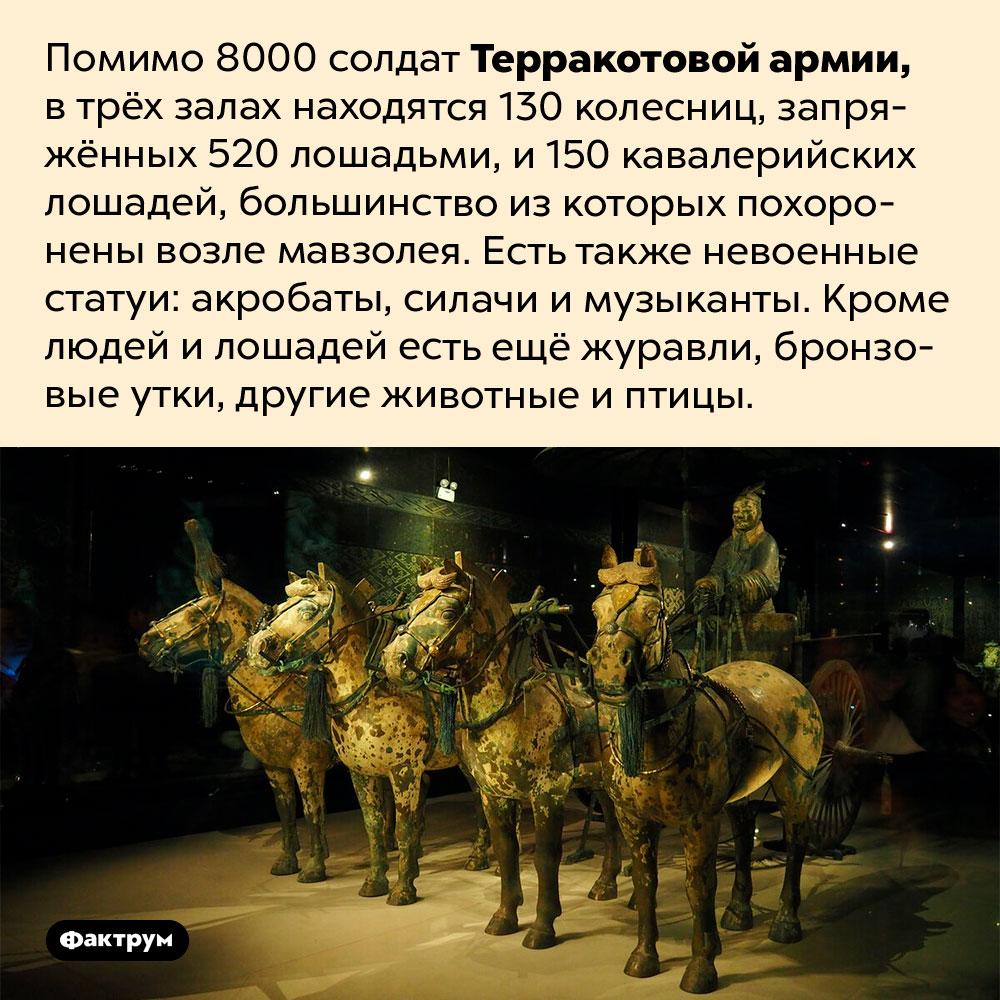 Терракотовая армия состоит нетолько извоенных. Помимо 8000 солдат Терракотовой армии, в трёх залах находятся 130 колесниц, запряжённых 520 лошадьми, и 150 кавалерийских лошадей, большинство из которых похоронены возле мавзолея. Есть также невоенные статуи: акробаты, силачи и музыканты. Кроме людей и лошадей есть ещё журавли, бронзовые утки, другие животные и птицы.