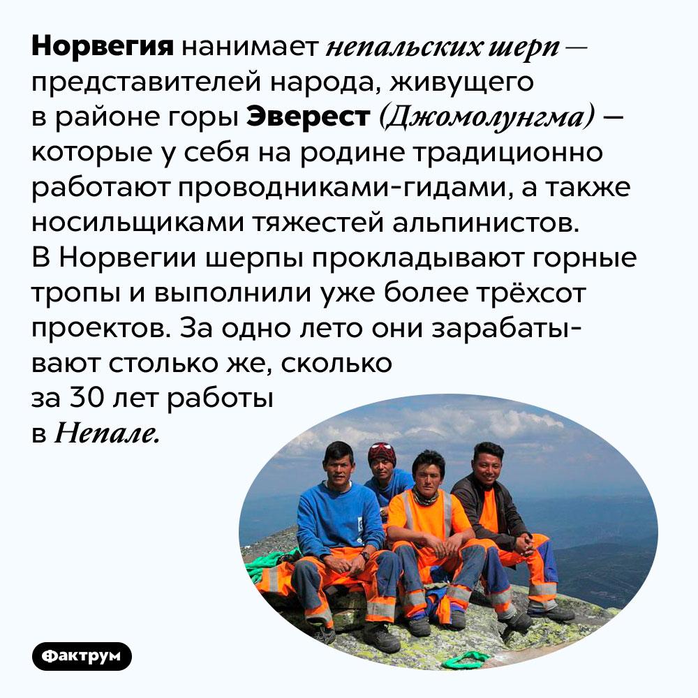Что непальские шерпы делают вНорвегии. Норвегия нанимает непальских шерп — представителей народа, живущего в районе горы Эверест (Джомолунгма) — которые у себя на родине традиционно работают проводниками-гидами, а также носильщиками тяжестей альпинистов. В Норвегии шерпы прокладывают горные тропы и выполнили уже более трёхсот проектов. За одно лето они зарабатывают столько же, сколько за 30 лет работы в Непале.