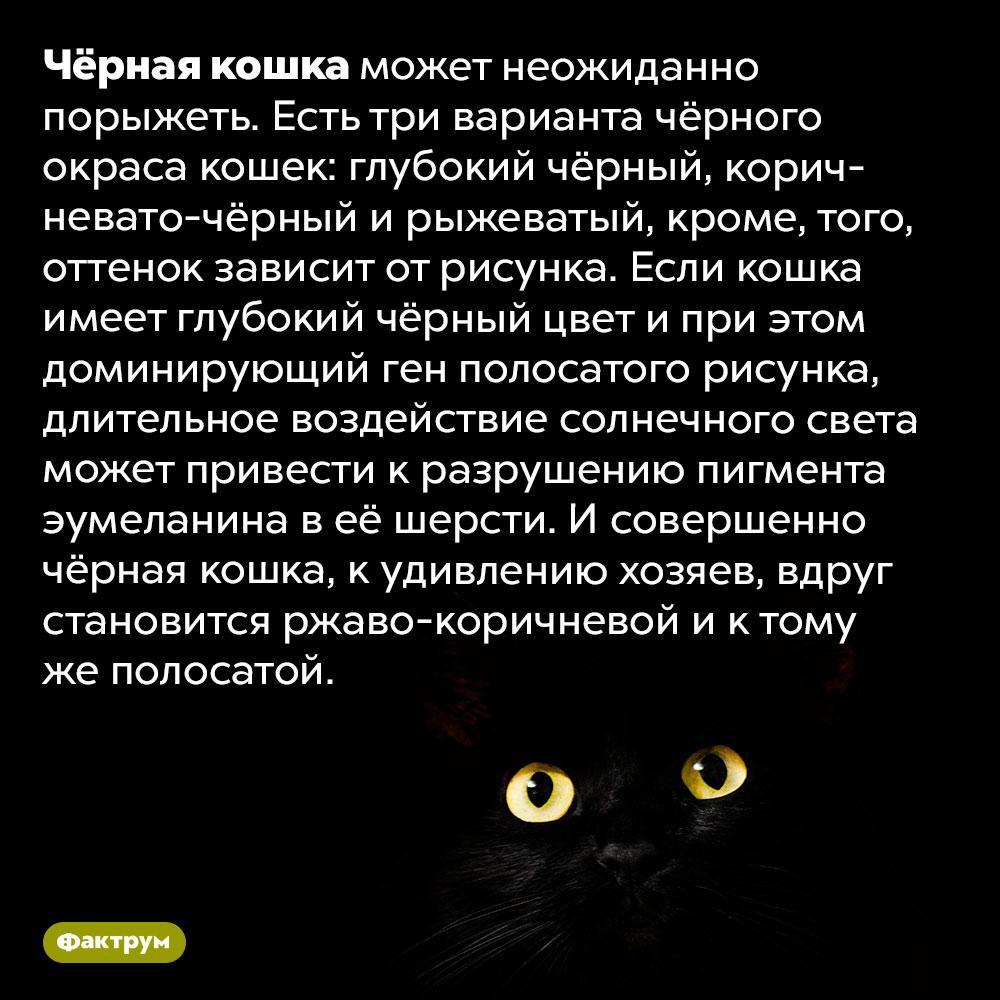 Чёрная кошка может стать рыжей. Чёрная кошка может неожиданно порыжеть. Есть три варианта чёрного окраса кошек: глубокий чёрный, коричневато-чёрный и рыжеватый, кроме, того, оттенок зависит от рисунка. Если кошка имеет глубокий чёрный цвет и при этом доминирующий ген полосатого рисунка, длительное воздействие солнечного света может привести к разрушению пигмента эумеланина в её шерсти. И  совершенно чёрная кошка, к удивлению хозяев, вдруг становится ржаво-коричневой и к тому же полосатой.