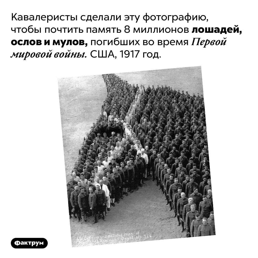 Лошади Первой Мировой войны. Кавалеристы сделали эту фотографию, чтобы почтить память 8 миллионов лошадей, ослов и мулов, погибших во время Первой мировой войны. США, 1917 год.